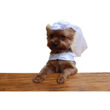 Vestido Luxo Para Cães Gatos Noiva Com Vêu Tamanhos M