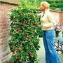 20 Sementes Morango Trepador Imp Da Alemanha - Frete Grátis
