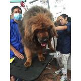Maquina Accesorios De Peluquería Canina Profesional Combo