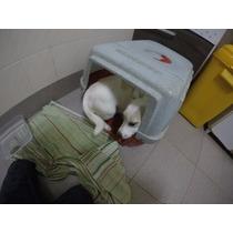 Filhote Jack Russel Terrier