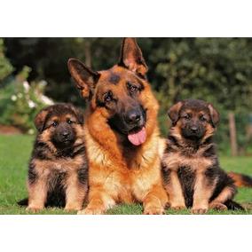 Cachorros Ovejeros Aleman Aceptamos Tarjetas!