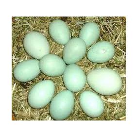 Só Ovos Azuis Indio Gigante Da Melhora Seleçao