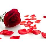 500 Pétalas De Rosas Artificiais Vermelhas - Seda Decoração