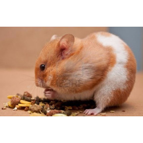 Mascota Hamster Común O Sirio, Golden Tienda Cuchos