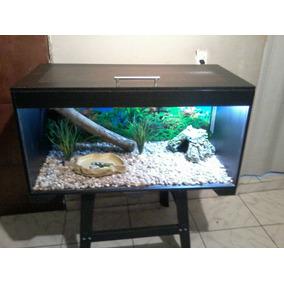 Terrário Répteis Iguana Jabuti Pogona Pet Nature Exóticos