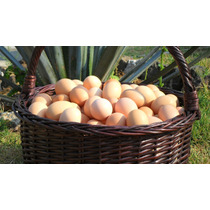 Huevo Organico De Granja