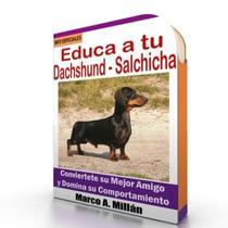 Como Educar A Un Perro Salchicha - Videos Paso A Paso
