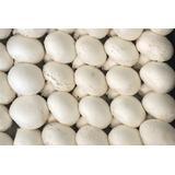 Hongos Champiñon Blanco Frescos Calidad Primera Premium Kg