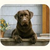 Mouse Pad Labrador Retriever Chocolate 23,5 X 20 Cms, Neopr