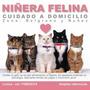 Niñera Felina A Domicilio!!!! Consulte Por Otros Barrios!!!!