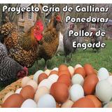 Aprende Cría De Gallinas Ponedoras Y Pollos De Engorde
