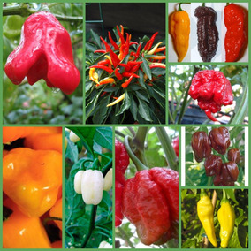 Oferta! Mix De Chiles 9 Especies Exóticas