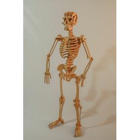 Esqueleto Humano 109 Peças - Quebra Cabeça 3d Dinobrinque