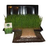Kit Wheatgrass Inicial - Bandeja + Semillas + Sustrato
