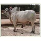 Software Ganadero Integral Para Ganado (bovinos Y Bufalos)