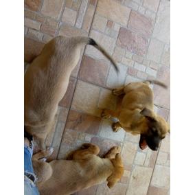 Adopcion De Cachorras Mestizas