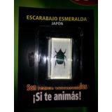 Bichos Fasciculo N°2 Escarabajo Esmeralda.