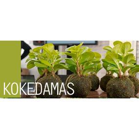 Kokedamas - Decoración Y Diseño De Interiores -