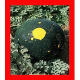 Melancia Lua E Estrelas - Moon & Stars - Fruta - Sementes