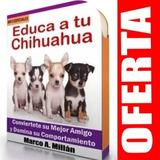 Guia De Entrenamiento Para Perro Chihuahua 5