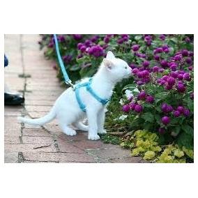 Coleira Peitoral Para Gatos