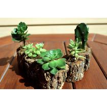 Troncos Con Cactus Y Suculentas (combo Por 5 Unidades)