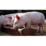 Raciones/comida Cerdo Lechón Iniciador 40 Kg