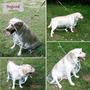 Capa Chuva Transparente Dog Pet Cão Tamanho Ggg Raça Grande