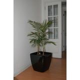 Exclusivo! Plantas Y Arreglos Para Interiores Autorregantes