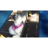 Arnés Personalizado Gato Mascota Accesorios