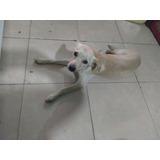Cachorro 5/6 Meses En Adopción Capital Federal