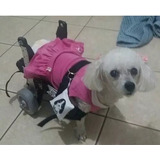 Cadeira De Rodas Para Cachorros Deficientes Pequeno Porte