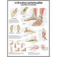 Mapa Hd Anatomia Do Pé 60x80cm Decoração Poster Fisioterapia
