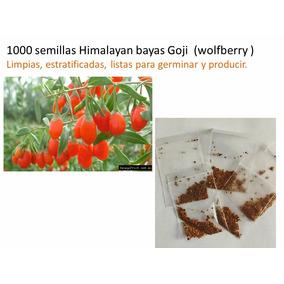 1000 Semillas Himalayan Goji Limpias Y Listas Germinar