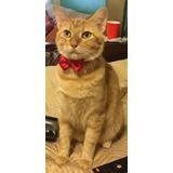 Collar Mascota Con Cascabel Perro Gato Conejito Uron Moño