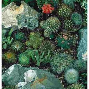 60 Sementes De Cactos Sortidos- Para Vasos E Jardins