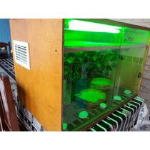 Terrário Repteis Cobras Lagartos Iguana Iluminação Termostat