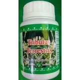 Tribulus Terrestris 60 Cps 500mg