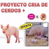 Aprende Cria Cerdos Tecnica Engorde Cochinos Ganado Porcino