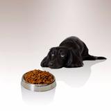 Comida Para Perros Adultos Ab Premium Adultos Ab 18 Kg