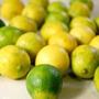 Mudas De Limão Galego - Enxertadas
