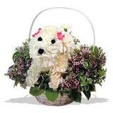 Perritos Diseñados Con Flores Cualquier Ocasión Especial