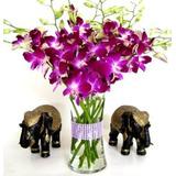 Flores Frescas - Orquídeas Dendrobium Púrpura Con Jarrón