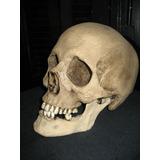 Craneo Tamaño Real, San La Muerte, Esqueleto, Santeria, Evil