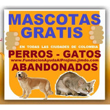 Gratis, Adopcion, Perros, Gatos, Bogota, Cali, Medellin, Etc