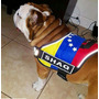 Arnes Venezuela Inu K9 Para Perro Somos Fabricantes