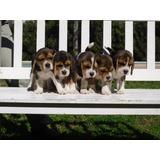 Cachorros Con Fca - Los Mas Lindos!!