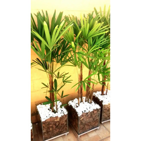 Planta Palmeira Ráfia Vaso De Vidro 30x30cm Promoção