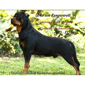Rottweiler - Pai Grande Campeão E Campeão Pan Americano