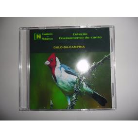Cd - Canto Galo-da-campina - Cantos De Pássaros - Maior Vari